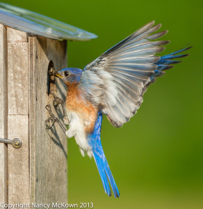 Photograph of Landing BlueBird