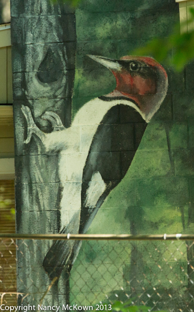 Photo of Painting of Redheaded Woodpecker