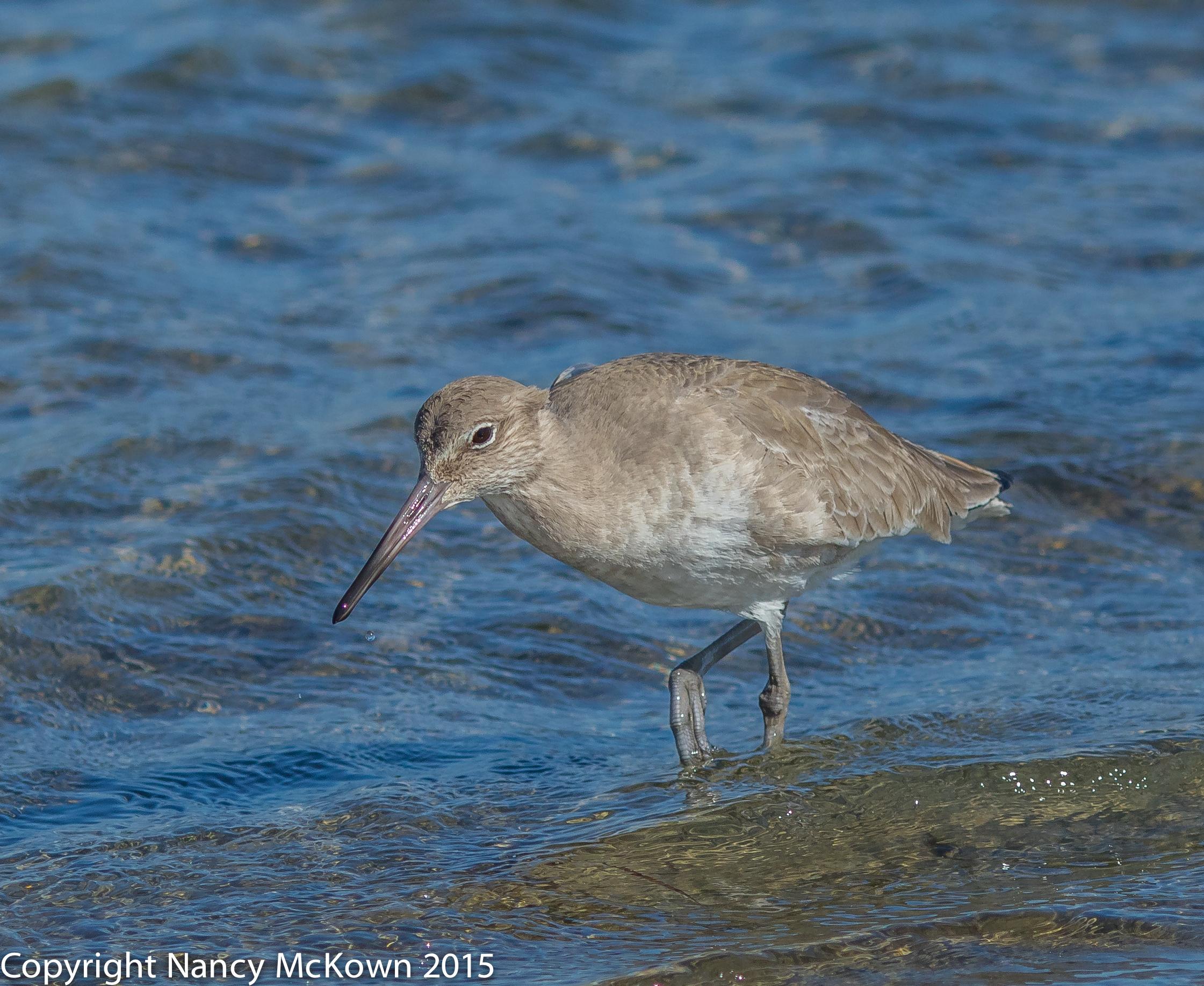 Photo of Shore bird