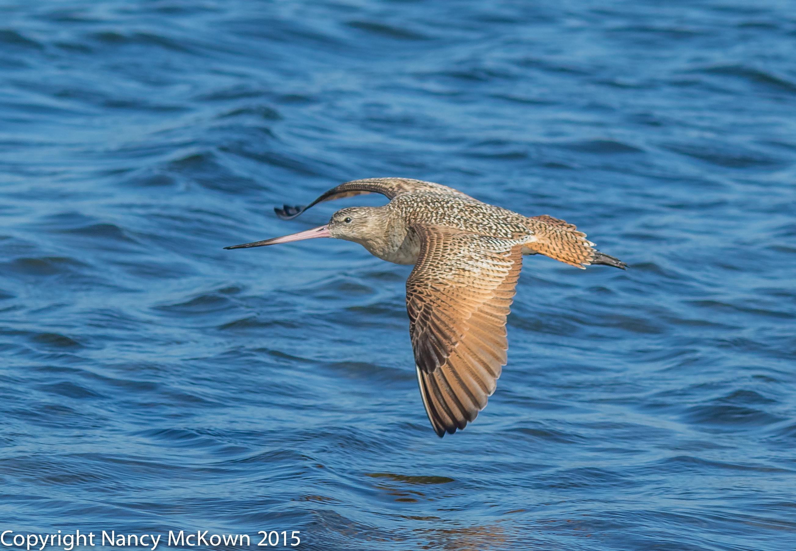 Photo of Long Beak