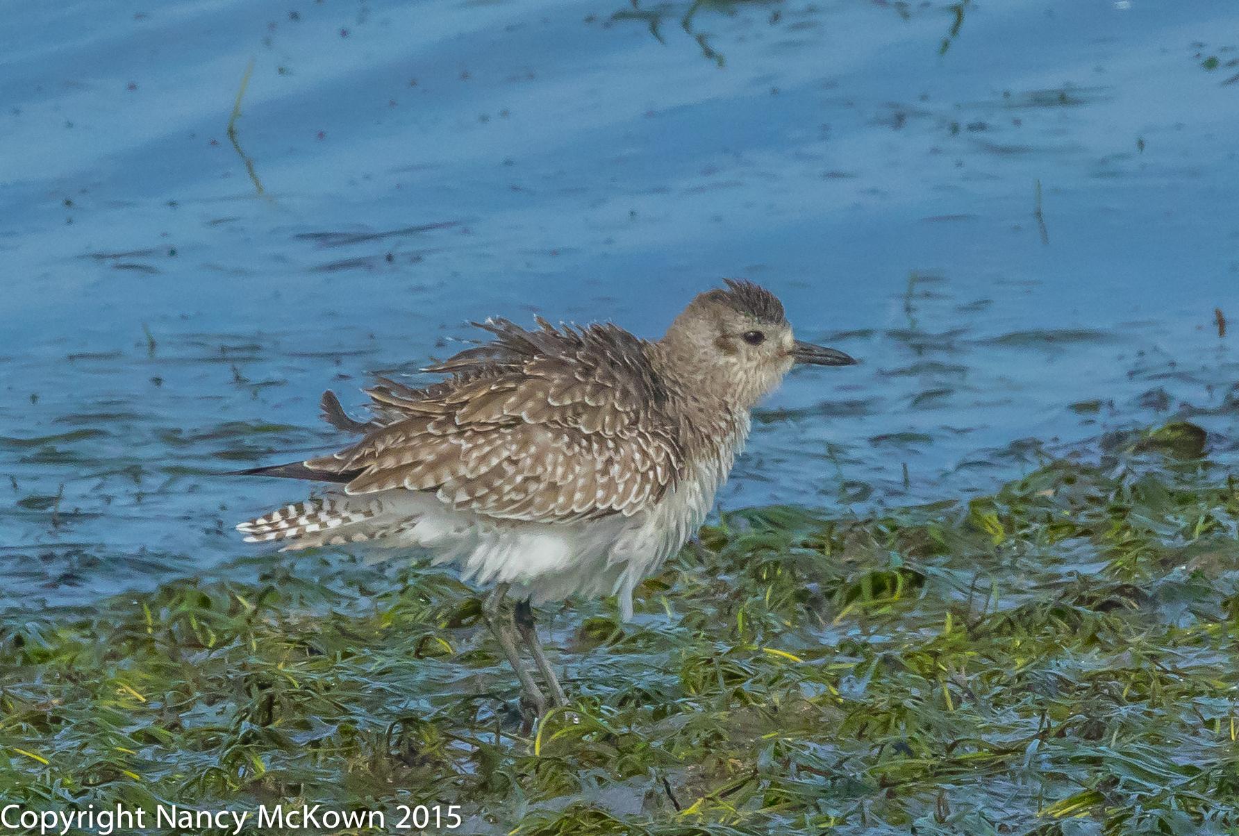 Photo of Little Beak