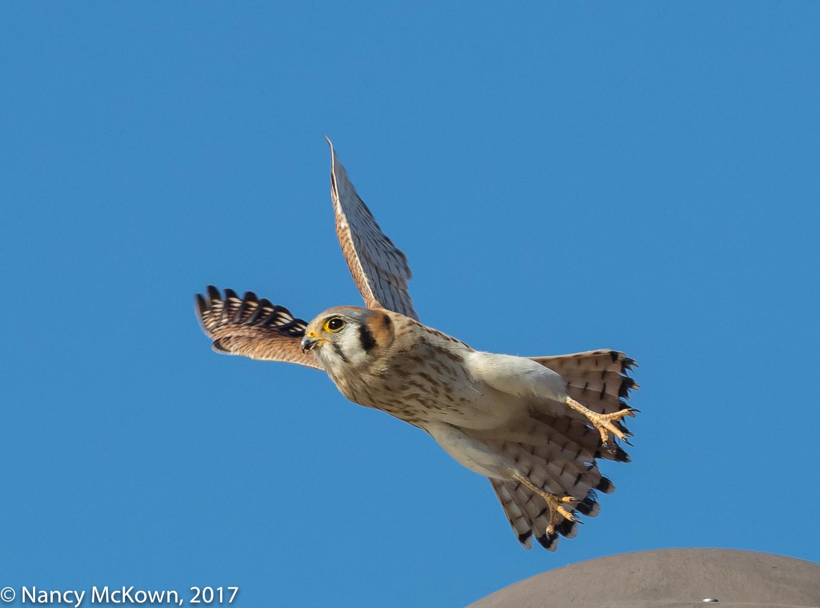 Kestrel at takeoff