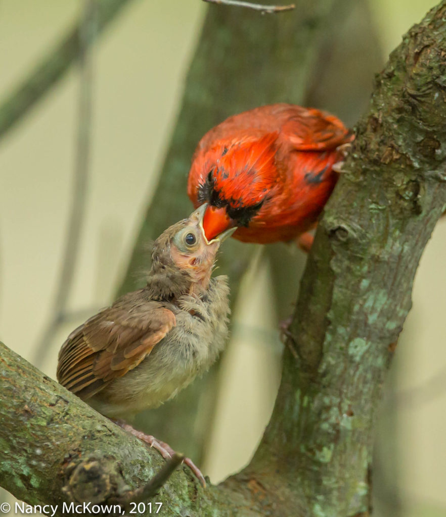 Photo of Cardinals